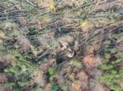 alberi-abbattuti-vaia