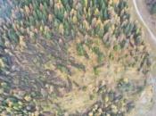 alberi-sradicati-vaia